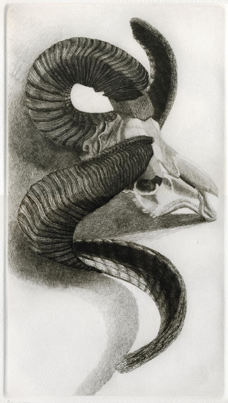 Elizabeth Quandt 'Aries III' Limited Edition, Signed Etching of Ram's Head - Print by Elizabeth Quandt