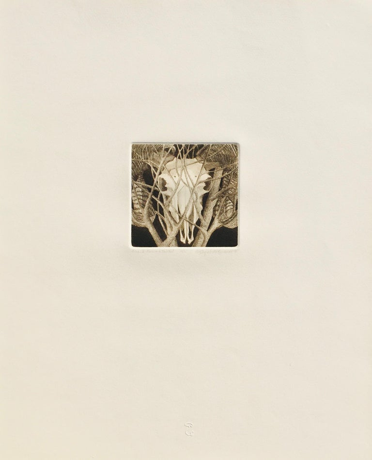 Elizabeth Quandt 'Aries IV' Limited Edition, Signed Etching of Ram's Head For Sale 2