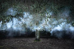 Between the Trees 11 - Contemporary photography, Landscapes, Nature imagery