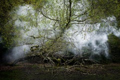 Between the Trees 13  - Contemporary photography, British art, Nature, Landscape