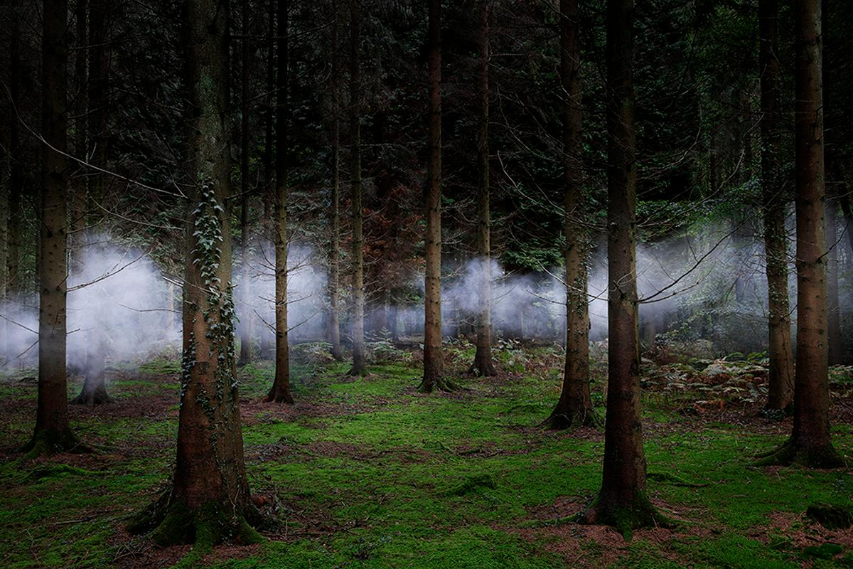 Between the Trees 2 - Ellie Davies, Smoke, Mist, Forests, Woodlands, Natural