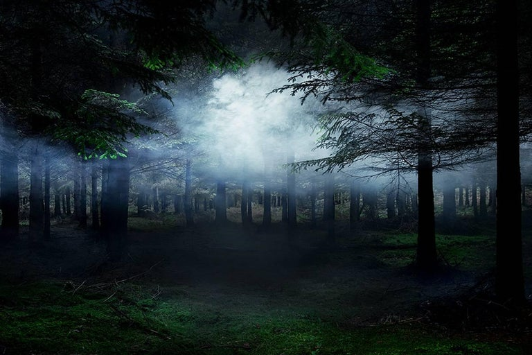 Between the Trees 4 - Ellie Davies, Forests, Mist, Nature, Landscapes, Dreams - Photograph by Ellie Davies