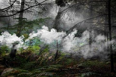 Between the Trees 5 - Nature imagery, Landscape photography, Smoke, Mist, Forest