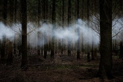 Between the Trees 6 - Contemporary Photography, Conceptual art, Smoke, Mist