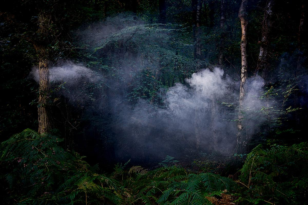Between the Trees 7 - Ellie Davies, Photography, Landscapes, Nature, Trees