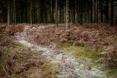 Come With Me 4 - Ellie Davies, Contemporary photography, British artists, Trees