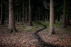 Come With Me 5 - Contemporary photography, British landscape, Forest imagery