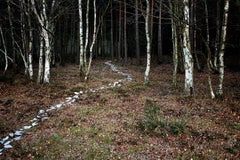 Come With Me 6 - Nature photography, Trees, Ellie Davies, Contemporary art