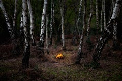 Fires 6 - Ellie Davies, Conceptual photography, Forest imagery, Woodland, Print