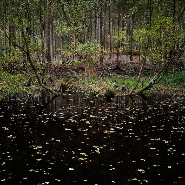 Half Light 10 - Ellie Davies, Contemporary, British, Photography, Forests - Black Color Photograph by Ellie Davies