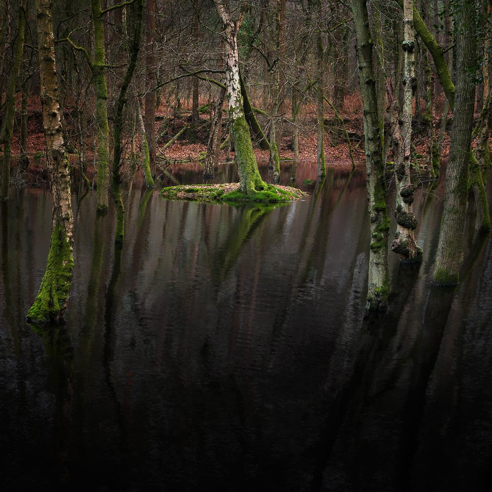 Half Light 12 - Ellie Davies, Landscapes, Forests, Humanity, Freedom, Peace