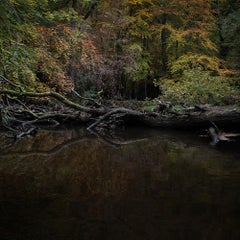 Half Light 2 - Ellie Davies, Humanity, Nature, Plants, Trees, Green, New Forest