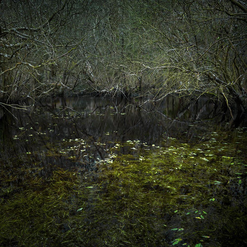 Half Light 4 - Ellie Davies, British, Forests, Nature, Plants, Liberty, Peace