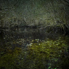 Half Light 4 - Ellie Davies, Contemporary, Photographs of forests, Nature