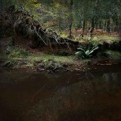Half Light 6 - Nature photography, Forests, Trees, Wildlife, Landscape, Prints
