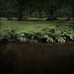 Half Light 9 - Ellie Davies, Photography, Nature, Forests, Plants, Life