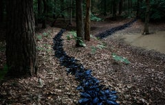 Knit One, Pearl One 1 (Contemporary British Photography, Landscapes, Woodland)