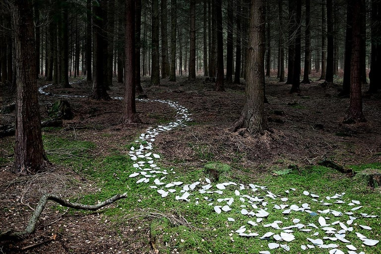 Knit One, Pearl One 9 - Ellie Davies, British, Landscape, Nature, Forests, Land - Photograph by Ellie Davies