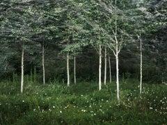 Seascapes 2 - Ellie Davies, Contemporary Photography, British Art, Landscape