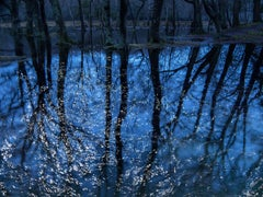 Seascapes 7 - Ellie Davies, Conceptual photography, Blue, Trees, Water imagery