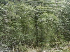 Seascapes 9 - Ellie Davies, Contemporary British Photography, Landscape, Forests