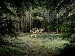 Smoke and Mirrors 4 - Photographs of trees, Forests, Nature imagery, Landscapes