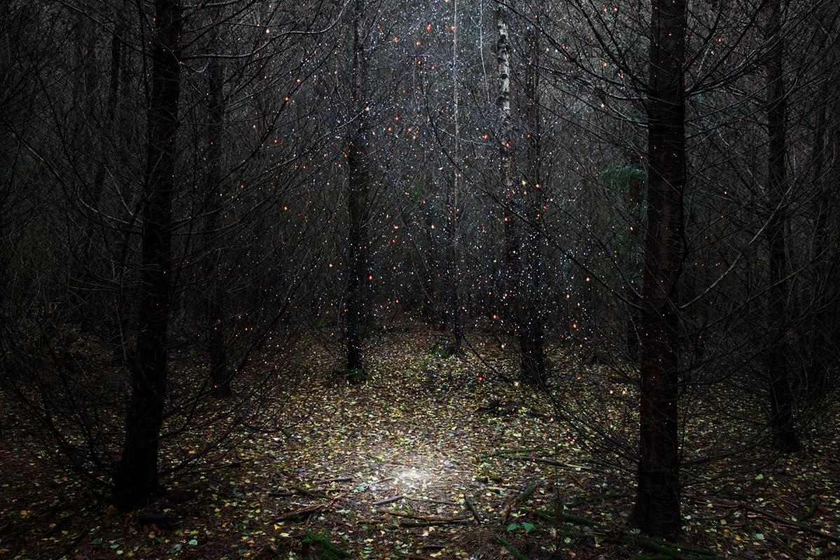 Stars 1 - Ellie Davies, Contemporary British Photography, Nature, Forest