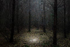 Stars 1 - Ellie Davies, Contemporary British Photography, Nature, Forest