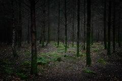 Stars 11 - Ellie Davies, British Photography, Forest, Nature, Trees, Landscape