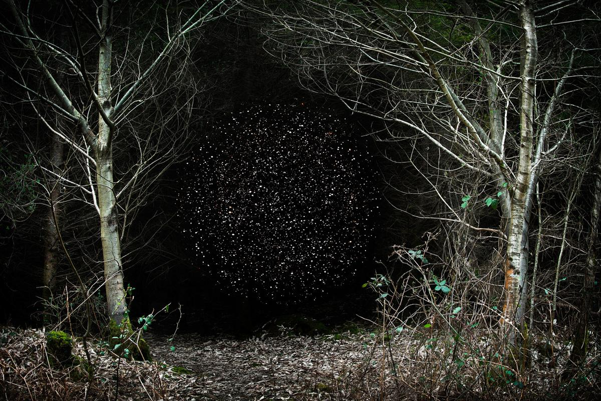 Stars 12 - Ellie Davies, Starry night, Forest imagery, Woodland, Photography