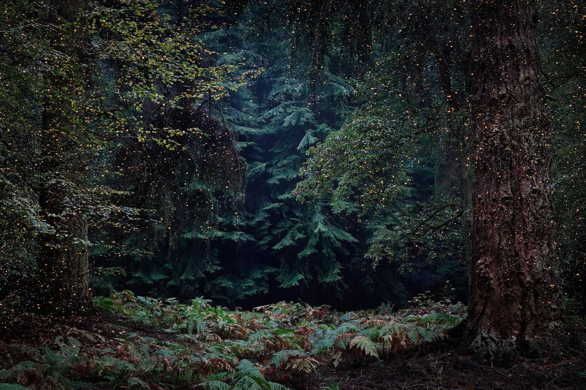 Stars 13 - Ellie Davies, Contemporary British Photography, Landscapes, Nature