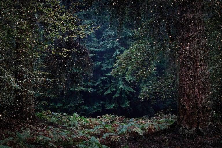 Stars 13 - Ellie Davies, Contemporary British Photography, Landscapes, Nature - Black Landscape Photograph by Ellie Davies
