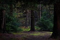 Stars 14 - Ellie Davies, Contemporary British Photography, Landscape, Nature