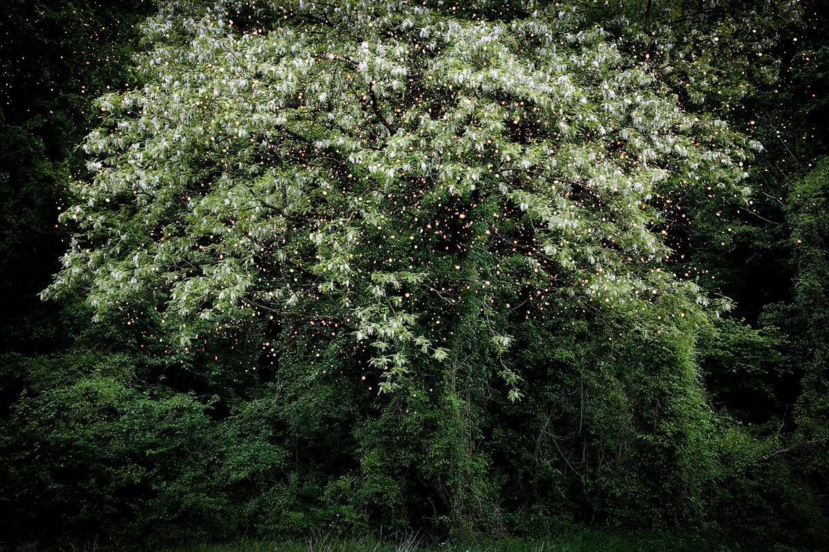 Stars 15 - Ellie Davies, Contemporary British Photography, Landscapes, Nature