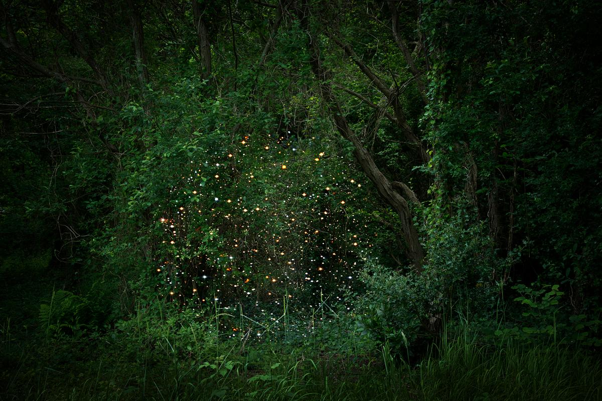 Stars 2 - Ellie Davies, Forest imagery, Starry night, Contemporary photography