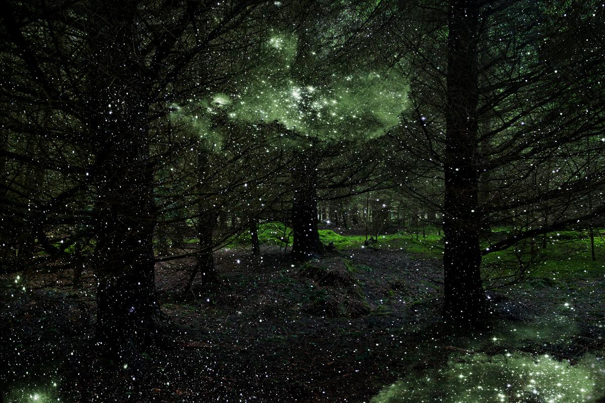 Stars 3 - Ellie Davies, Contemporary Photography, Forest imagery, Woodland