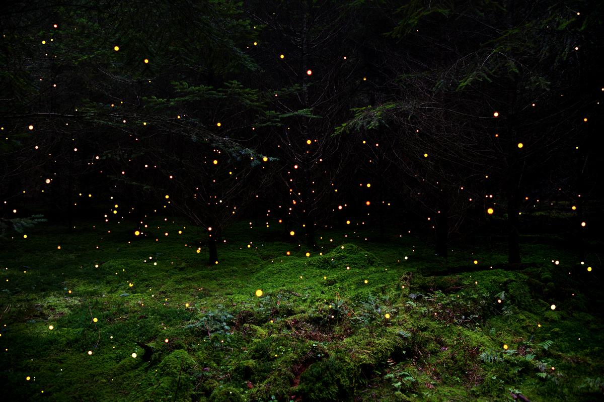 Stars 5 - Ellie Davies, Contemporary British Photography, Nature, Forests