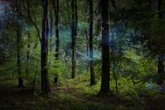 Stars 9  - Ellie Davies, Contemporary Photography, Forest, Nature, Night