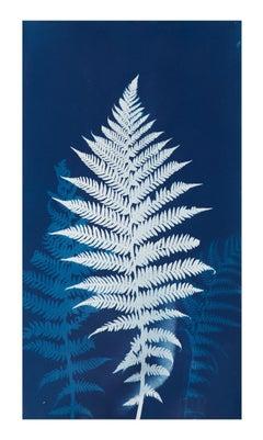 """""""Cyanotype Fern"""" - Original Blue Cyanotype Print of Ferns"""