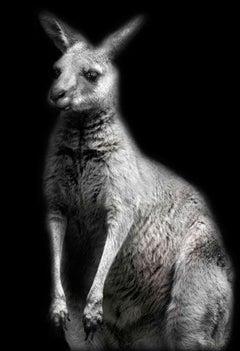Animal (10)
