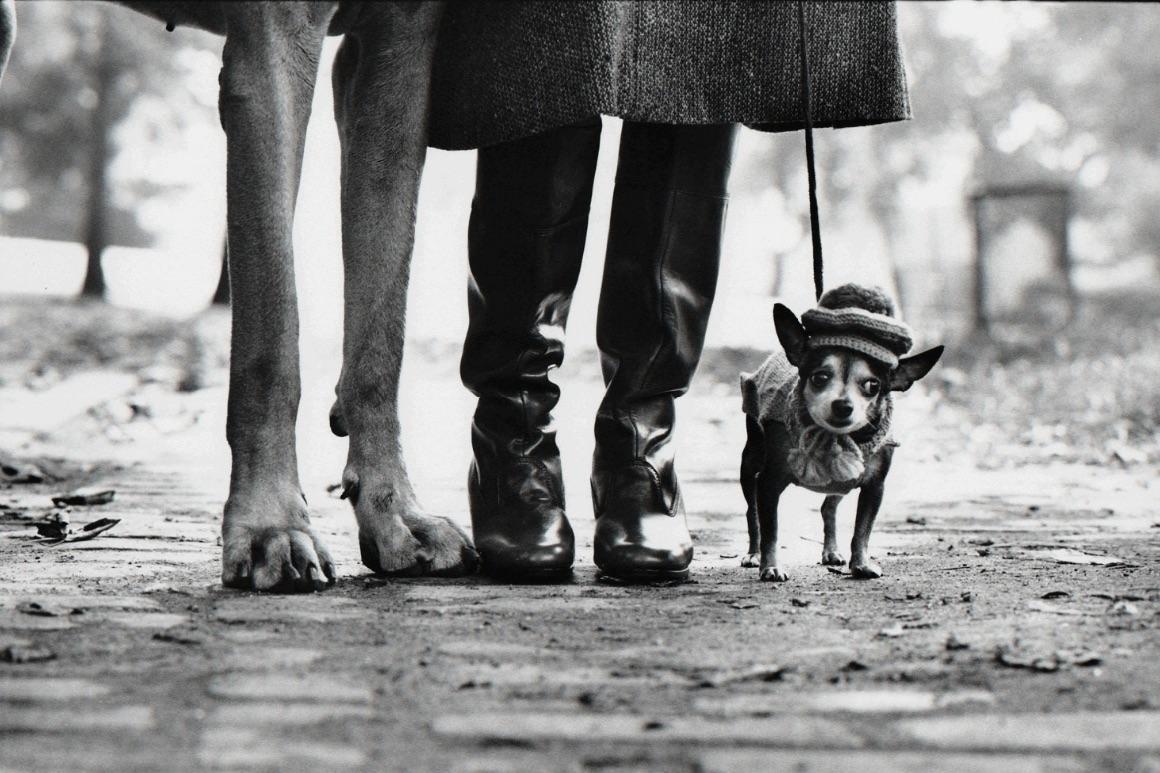 Dog Legs, New York City