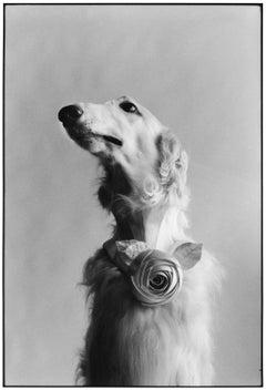 New York City, 1999 - Elliott Erwitt (Black and White Photography)