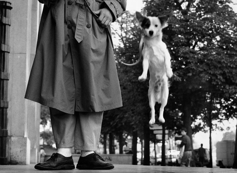 <i>Paris, France (Dog Jumping),</i> 1989, by Elliott Erwitt, offered by PDNB Gallery