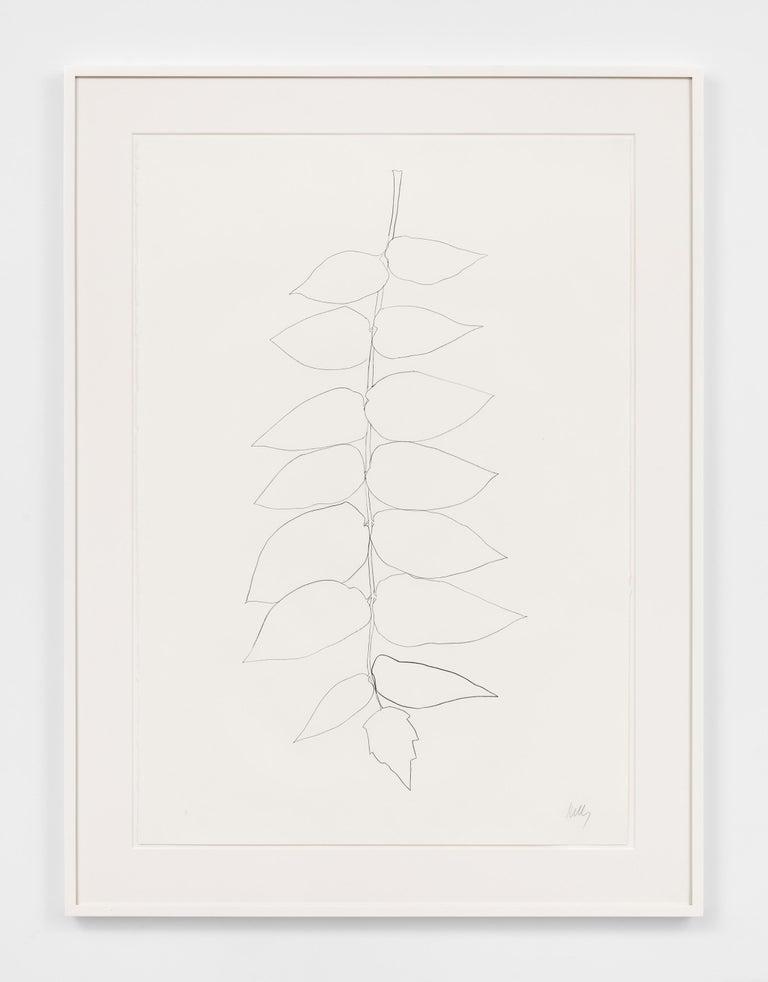Ailanthus Leaves II (Vernis du Japon II) - Print by Ellsworth Kelly