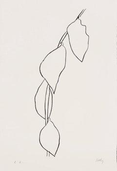 Branche de citron (Lemon Branch) -  Ellsworth Kelly, Minimalism, Still-life