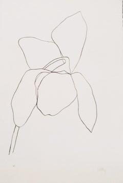 Cyclamen I -  Ellsworth Kelly, Minimalism, Flora, Still-life, Lithograph, Nature