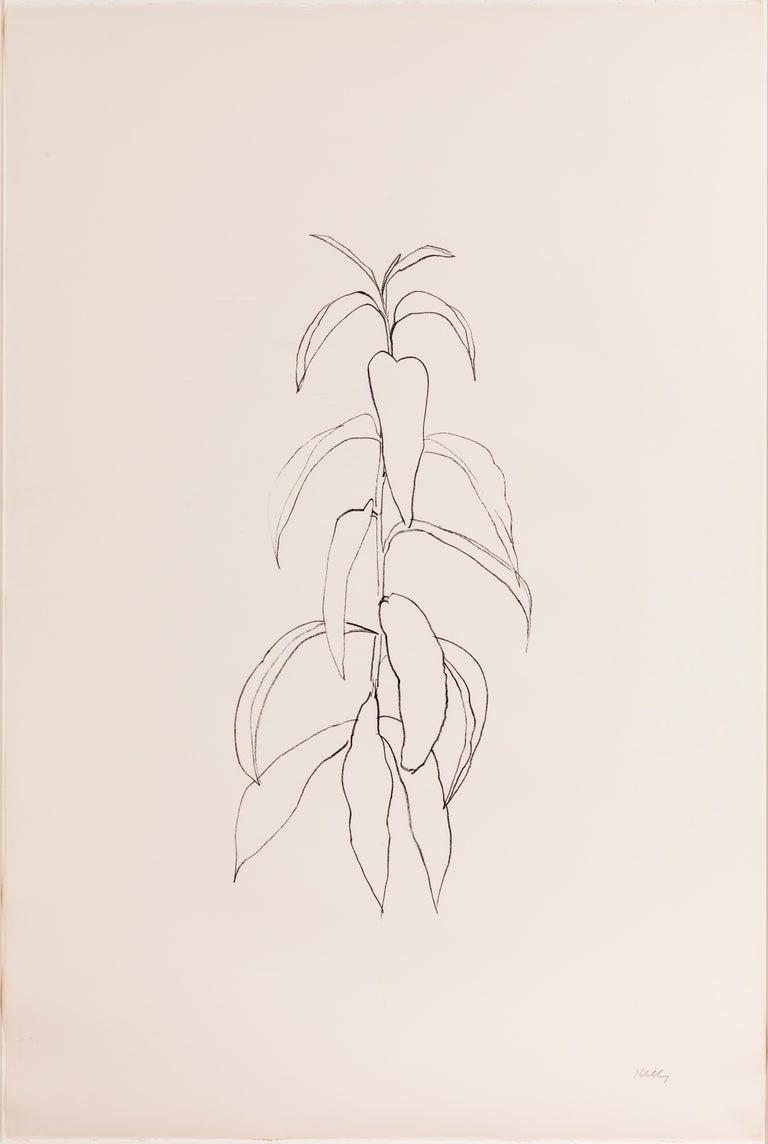Ellsworth Kelly Still-Life Print - Peach Branch