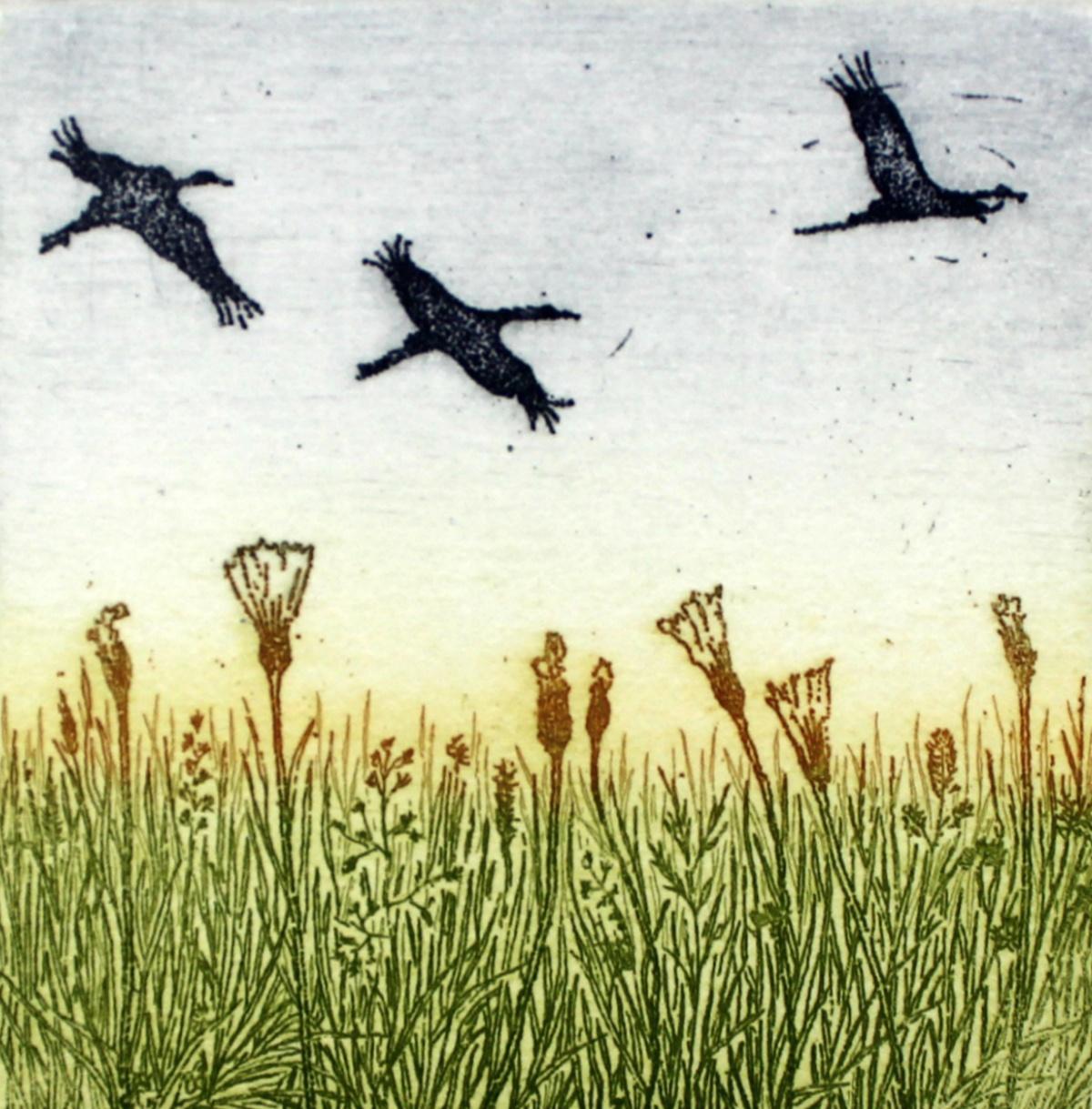 Arrivals - XXI century, Figurative etching, Birds, Colourful