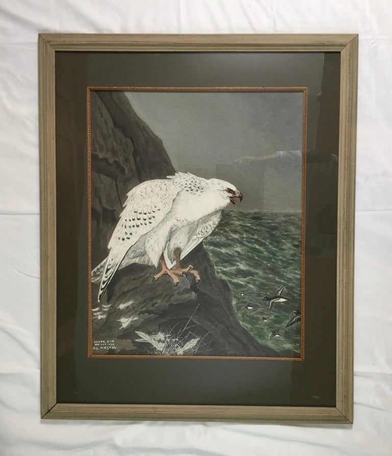 Beautiful majestic Gouache of a Gyr Hawk. Nice large size. Overall 26