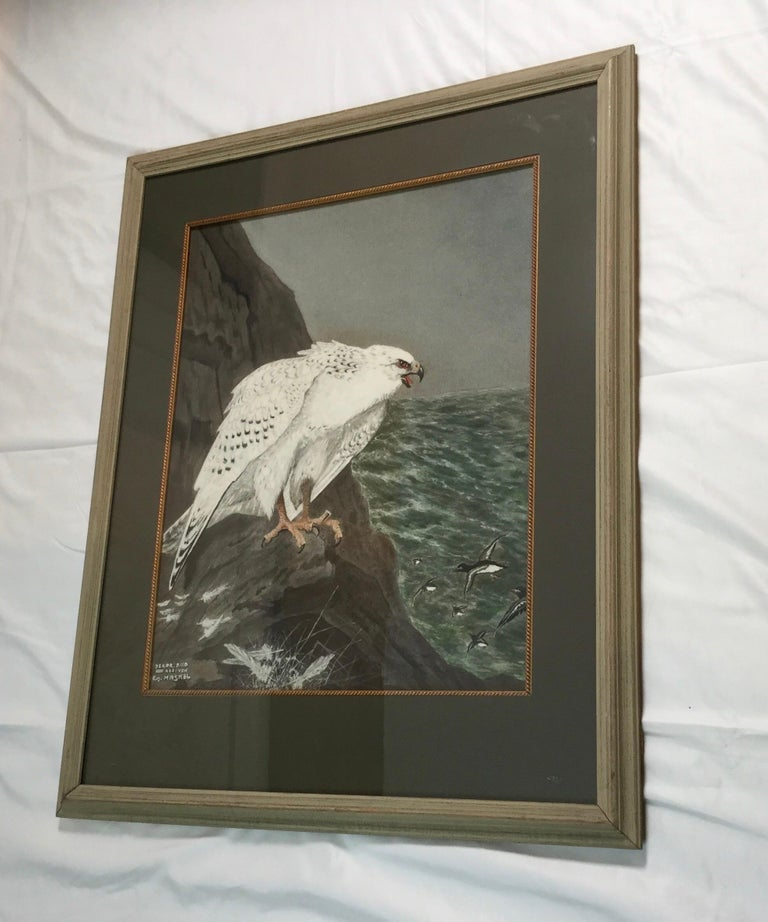 North American E.M.Haskel Gouache on Paper Painting of Gyr Hawk Bird For Sale